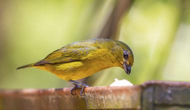¿Qué tipo de comida para pájaros es mejor para cada ave?